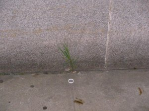 Blades of grass in concrete