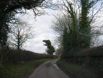 Oak tree in the shape of a dinosaur